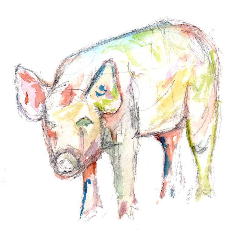 pig standing painted in watercolor spring colors